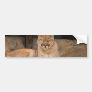 León de montaña etiqueta de parachoque