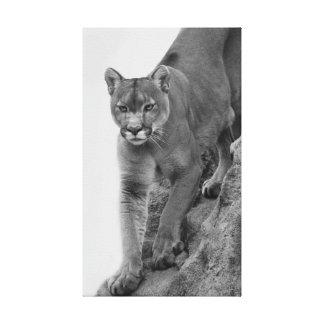 León de montaña en blanco y negro lona estirada galerias