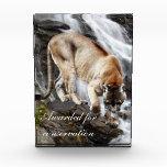 León de montaña en la cascada