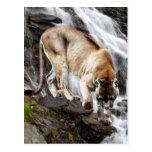 León de montaña en la cascada postal