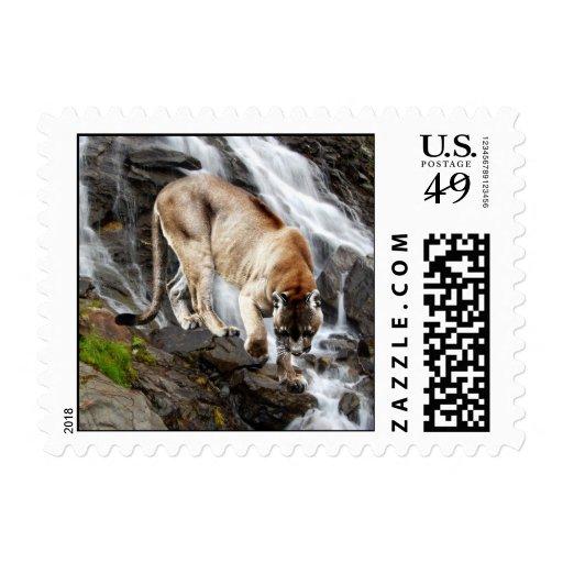 León de montaña en la cascada sellos