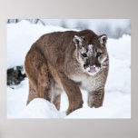 León de montaña en la nieve poster