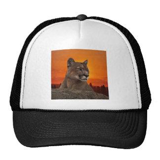 León de montaña en la puesta del sol gorras