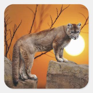 León de montaña en la puesta del sol pegatina cuadrada