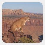 León de montaña pegatina cuadrada