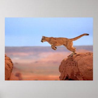 León de montaña póster