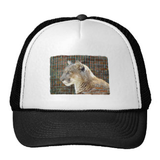 León de montaña/puma gorros bordados