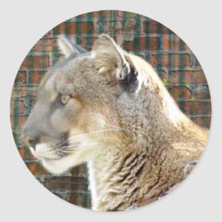 León de montaña/puma pegatina redonda