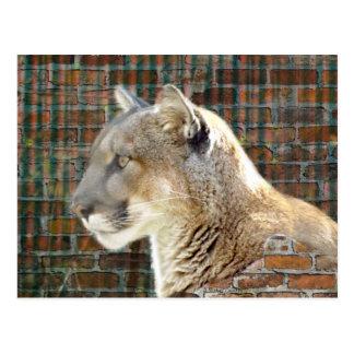 León de montaña/puma postal
