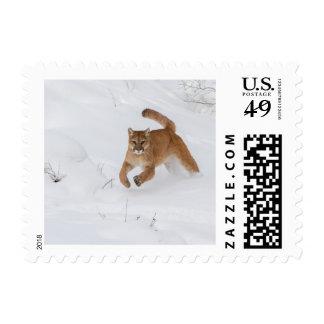 León de montaña que corre en la nieve sellos postales