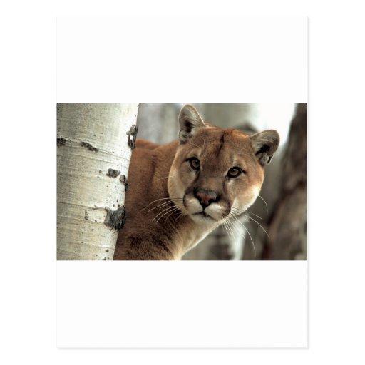 León de montaña que pega una actitud postal