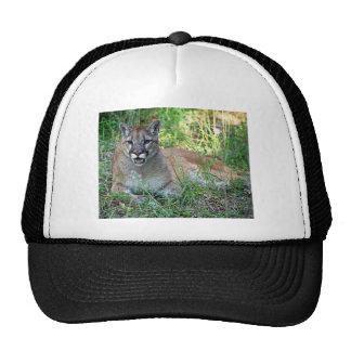 León de montaña que se queja gorras