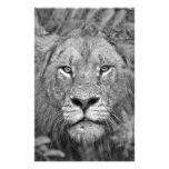 León de observación, Suráfrica Papelería De Diseño