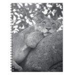 León de reclinación surafricano cuaderno