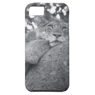 León de reclinación surafricano iPhone 5 Case-Mate fundas