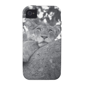 León de reclinación surafricano vibe iPhone 4 carcasas