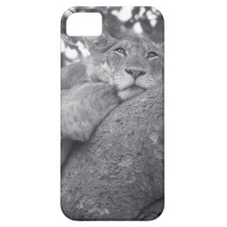 León de reclinación surafricano iPhone 5 Case-Mate cobertura