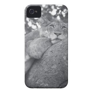 León de reclinación surafricano iPhone 4 funda