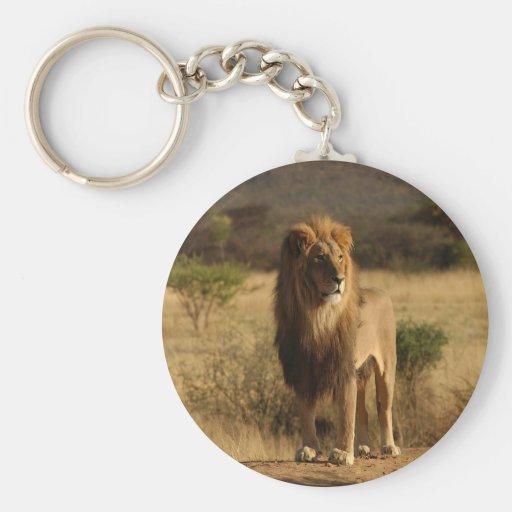 León de Serengeti Llavero Redondo Tipo Pin