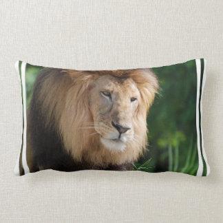 León de vagabundeo almohada
