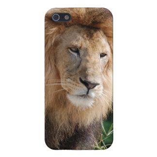 León de vagabundeo iPhone 5 carcasas