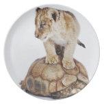 León del bebé que se coloca en la tortuga, fondo plato de comida