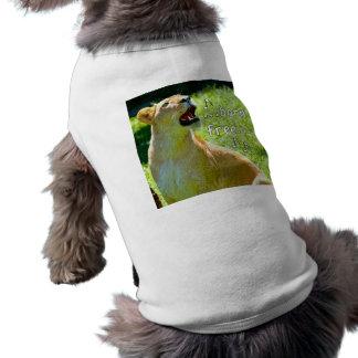 León del canto ropa para mascota