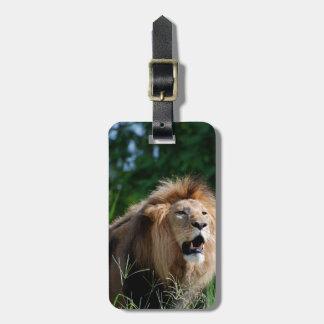 León del Kenyan Etiquetas Maletas