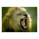 León del rugido tarjeta