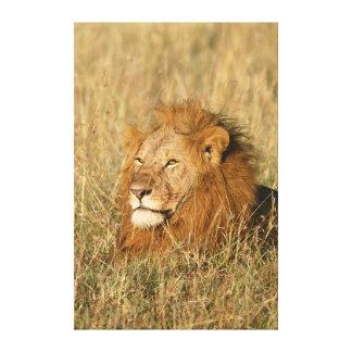 León del varón adulto en la primera luz impresión en lona
