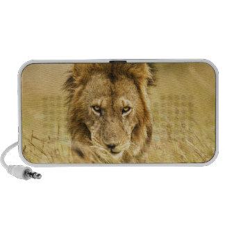 León del varón adulto, Panthera leo, Masai Mara, K Laptop Altavoces