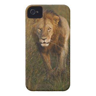 León del varón adulto que camina a través de Case-Mate iPhone 4 cárcasa
