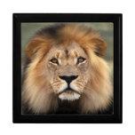 León - el rey de la selva cajas de joyas