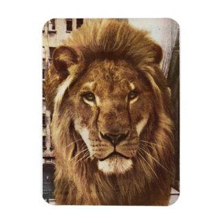 león en ciudad imán rectangular