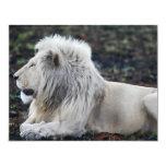 León en descanso invitación 10,8 x 13,9 cm