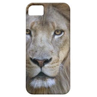 León en el parque zoológico de Sacramento, CA del iPhone 5 Funda