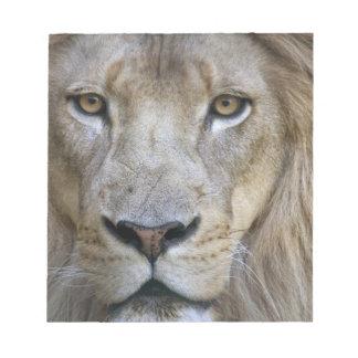 León en el parque zoológico de Sacramento, CA del  Libreta Para Notas