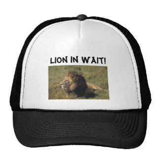 ¡León en espera! Gorro De Camionero