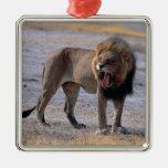 León en sabana adorno navideño cuadrado de metal