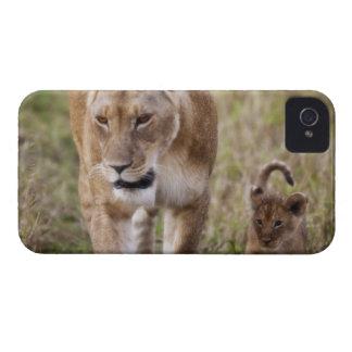 León femenino con el cachorro (Panthera Leo) como Carcasa Para iPhone 4 De Case-Mate