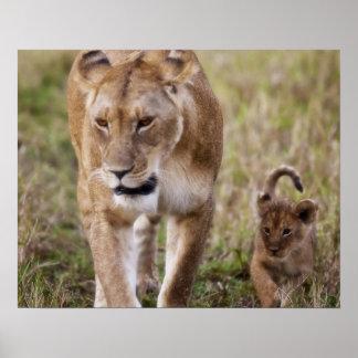 León femenino con el cachorro (Panthera Leo) como  Poster