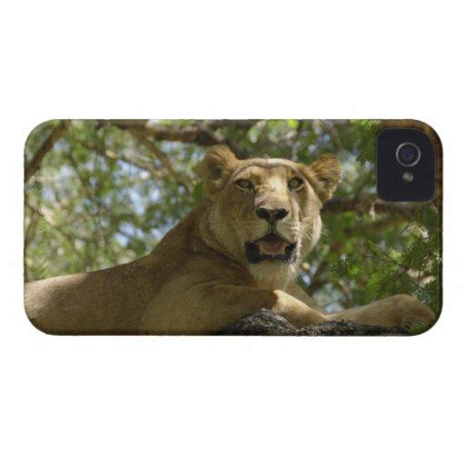 León femenino en un árbol Case-Mate iPhone 4 cárcasas