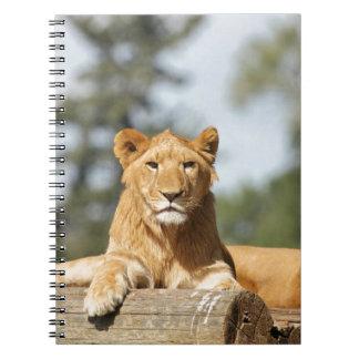 León femenino libros de apuntes con espiral