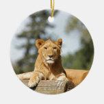 León femenino ornamentos de reyes magos
