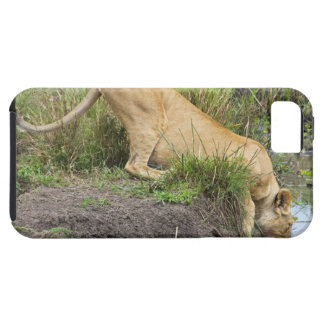 León femenino (Panthera leo), nacional de Mara del Funda Para iPhone 5 Tough
