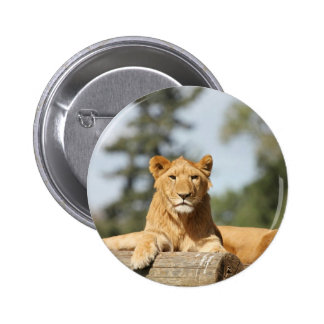 León femenino pins