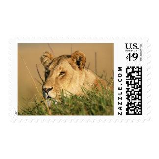 León femenino sello
