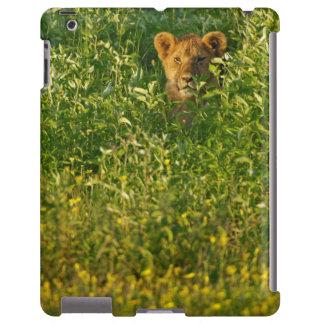 León joven (Panthera Leo) que acecha, Ngorongoro