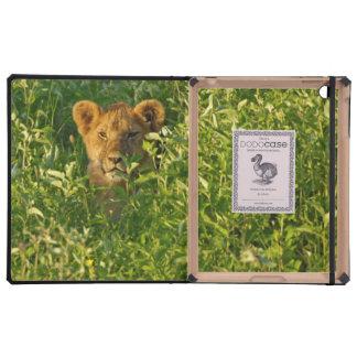 León joven (Panthera Leo) que acecha, Ngorongoro iPad Carcasas