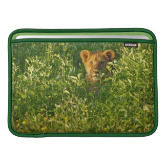 León joven (Panthera Leo) que acecha, Ngorongoro Fundas Macbook Air